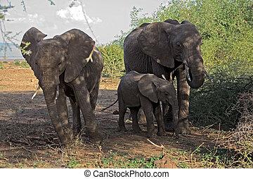 018, 動物, 象