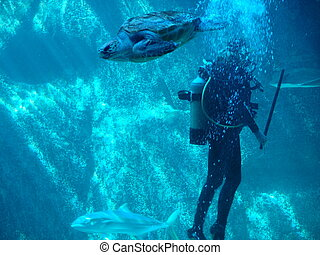 dancing with turtles - turtles and diver on the move