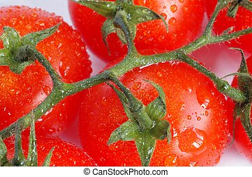 Wet Tomatoes - Tomatoes on white background