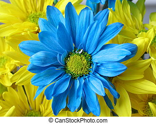 Blue Daisy This is a bouquet of crazy daisies Taken with...