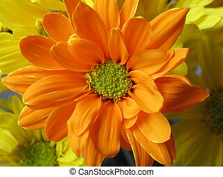 Orange Daisy - Orange Daisy. This is a bouquet of crazy...