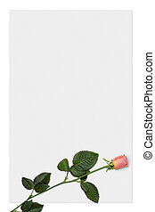 Paper 4 - Sheet of paper with a pink rose, love letter...