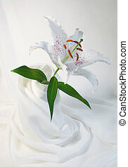 White Lily - White lily on light fabric background