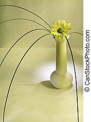 Lonely Daisy - Still life with yellow daisy