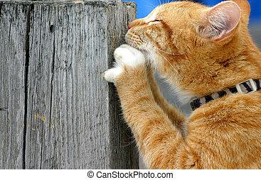 Stalker 16 - Feline