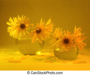 Yellow Passion - Yellow daisies (taken with diffuse filter)
