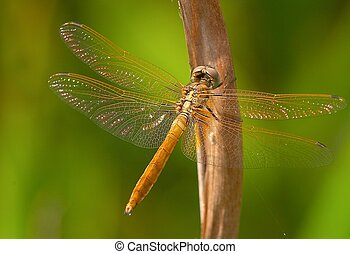 Dragonfly on perch