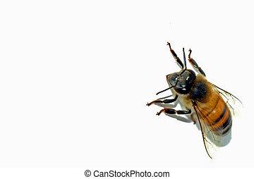 abelha, estoque