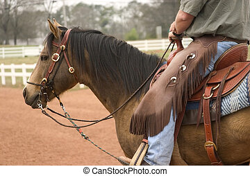 Working Horse - Quarter Horse stallion under western tack