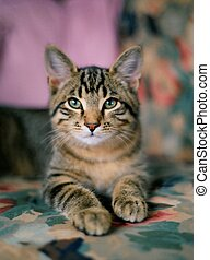 Young cat - A selectivesoft focus portrait of a majestic...