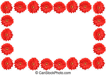 high resolution gerbera frame 2