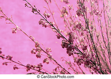Heather against a pink background