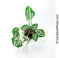 Uprooted Plant1 - small decorative plant