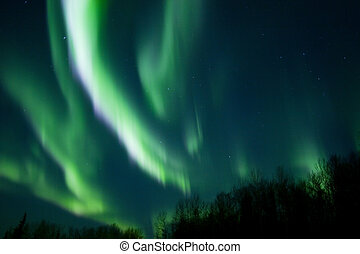 Colors of the northern lights over trees - Active northern...