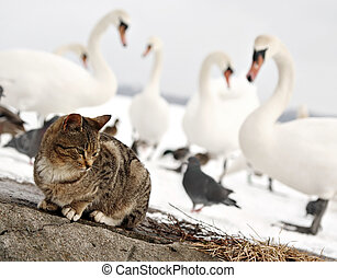 Not friendly birds - cat and birds