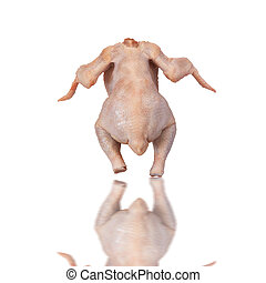 CHICKEN ISOLATED - Chicken isolated with clipping path