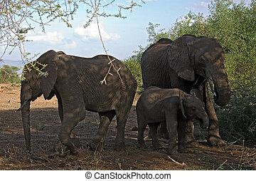 019, 動物, 象