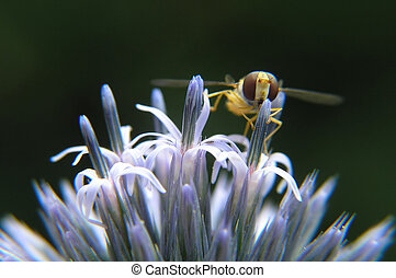 flower and bee - Close-up of flower and bee