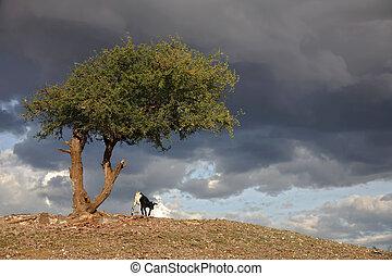 africa landscape 030 serengeti masai village