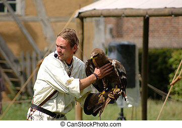 Falcon, hawk trainer - Male falcon, hawk trainer working...