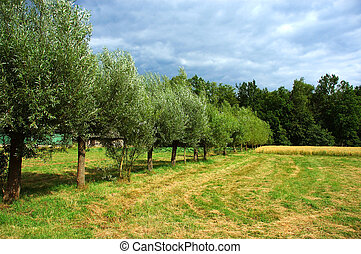 Agriculture, rural scene.