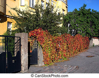 Fence from red leave