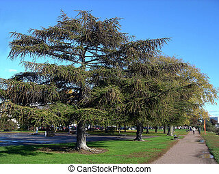 City old larches