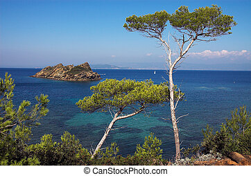 Landscape with pines on the island of the Cote dAzure