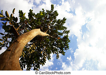 looking up a tree trunk to the sky