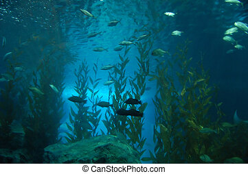 Underwater - Group of fishes swimming by