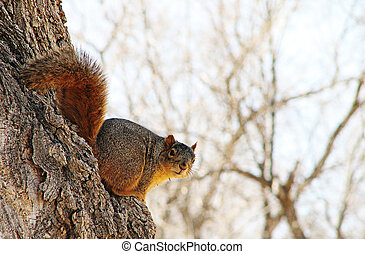 Squirrel - A squirrel posing for camera on the sid of a tree...