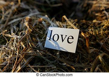 Lost Love - lost love come find it