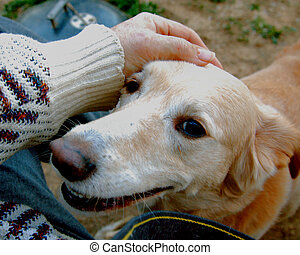 petting best friend - my hand petting my smiling best buddy