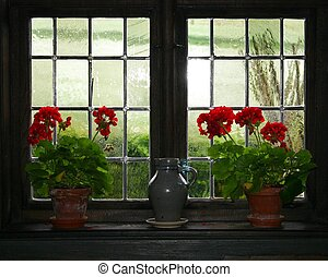 Geraniums and jug - Some Geraniums and a jug in front of a...