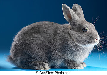 Rabbit on blue background