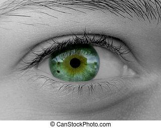Female eye - Beautiful green eye