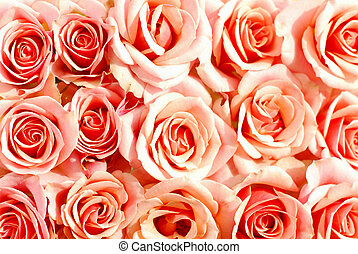 Pink roses background - Background of pink roses
