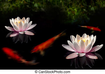 Lilypond - Waterlily flowers and goldfish in dark pool with...