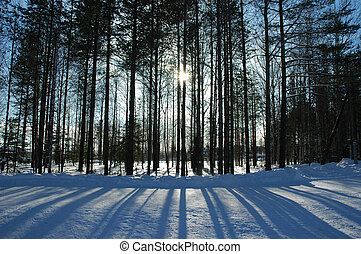 shadows from pinetrees. striped pattern on snow