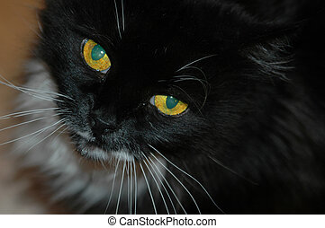 Cat Eyes - Kitty\\\\\\\'s waits patiently, drooling, before...
