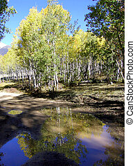 Reflections - Autumn foliage reflected in a puddle on the...