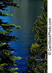 REJUVENATING trees - YELLOWSTONE National Park rejuvenating...