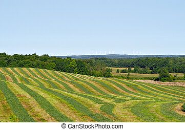 Colorful Hayfield - Colorful hayfield with windtowers on...