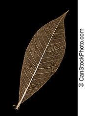 Leaf skeleton - An orange leaf skeleton on a black...
