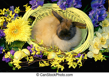 Easter Bunny - Adorable American Fuzzy Lop bunny sits in a...