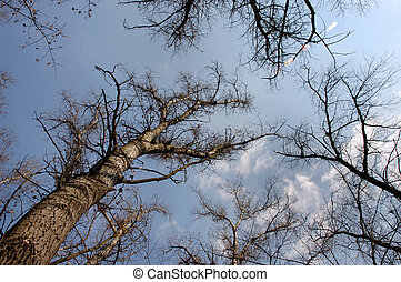 Trees 4 - Look from under trees to the sky
