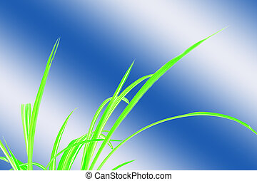 Green Grass with blue and white