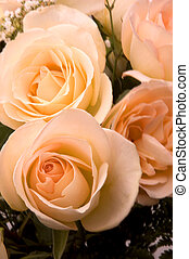 Bridal Roses - Peach Colored Bridal Roses Focus on the lower...