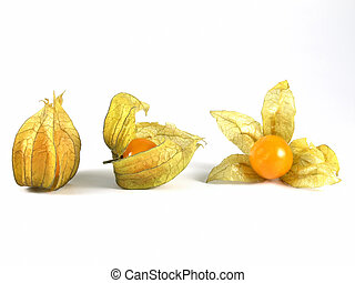 physalis - OLYMPUS DIGITAL CAMERA Physalis fruit