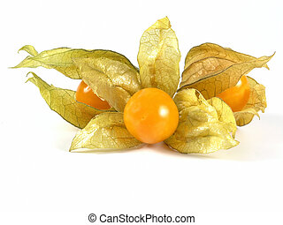 physalis - OLYMPUS DIGITAL CAMERA         